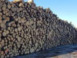 Tarcica Nieobrzynana - Deska Tartaczna, Sosna Zwyczajna - Redwood, Świerk - Whitewood