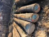 Brown/ White Ash Logs, 30+ cm
