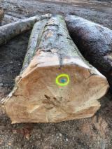 Saw Logs, Red Oak