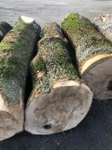 Hardwood Logs For Sale - Register And Contact Companies - Ash burl