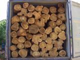 Trouvez tous les produits bois sur Fordaq - Vend Grumes De Trituration Balsamo MATAGALPA