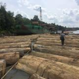 Vender Troncos Serrados Meranti, Dark Red US Lacey Act Indonésia