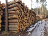 Logs Purchasing Manager in Czech Republic