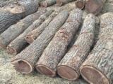 Floresta E Troncos - Comprar Troncos Serrados Noz Preta Canadá Midwest