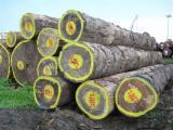 Furnierholz, Messerfurnierstämme, Zingana , CE