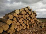 Starsze Drzewa Na Sprzedaż - Kupuj I Sprzedawaj Drzewo Na Fordaq - Chorwacja, Akacja