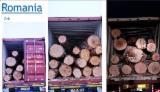 Oak Logs
