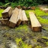 Sawn And Structural Timber North America - Almendro, Cumaru Beams