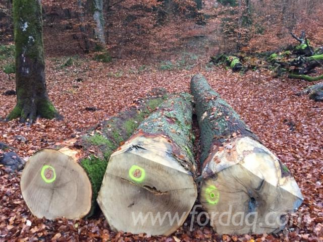 Wholesale saw logs - 1st/2nd choices A/B 60+ cm Oak Saw Logs Switzerland