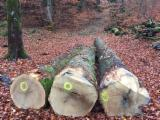 Forest And Logs Europe - 60+ cm Oak Saw Logs Switzerland