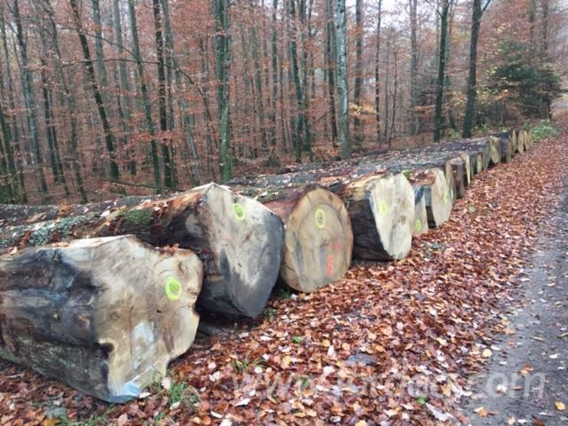 60+ cm Oak Saw Logs Switzerland