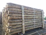 Pinus sylvestris peeled and machine rounded poles