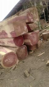 Padouk logs and square logs