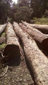 方形原木, 缅茄(苏)木, 紫木, 筒状非洲楝木