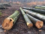 Schnittholzstämme, Buche, FSC