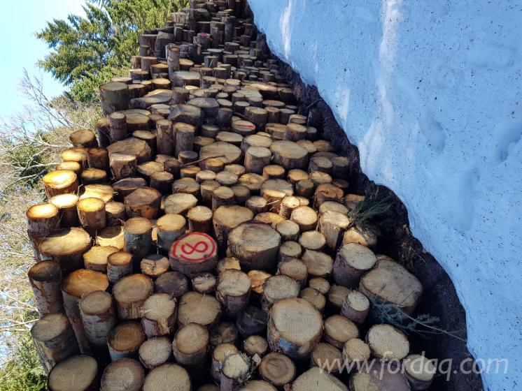 Wholesale Spruce 20-30 cm BC Saw Logs from France, Alsace Lorraine