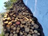 Evidencije Trupaca Za Prodaju - Drvenih Trupaca Na Fordaq - Za Rezanje, Jela -Bjelo Drvo