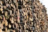 Forêts Et Grumes - Strasbourg Recherche billons de Hêtre en 4-6m
