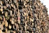 Find best timber supplies on Fordaq - BNE (BOIS NEGOCE ENERGIE) - We Need Beech Industrial Logs