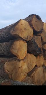 Forest and Logs - 40; 49, 50; 59; 60+ cm Oak Veneer Logs Serbia
