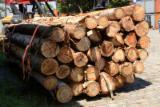 Schnittholzstämme, Eukalyptus
