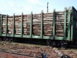 Stämme Für Die Industrie, Faserholz, Espe, Aspe