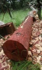 Schnittholz Und Leimholz Afrika - Balken