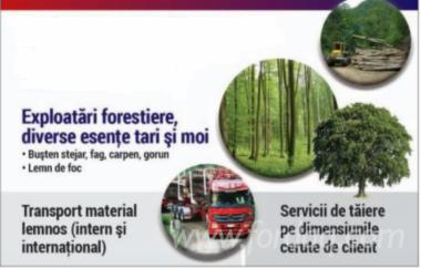 Mantenimiento-Forestal