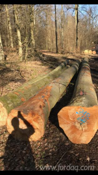 40--cm-Beech-Saw-Logs-from