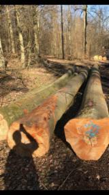 Wälder Und Rundholz - German Beech Logs AB Sawing/Peeling Grade