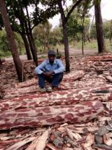 Trouvez tous les produits bois sur Fordaq - COURTEX-MADERAS TROPICALES S.L. - Vend Grumes De Trituration Pau Rosa