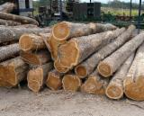 Forest And Logs North America - Teak wood log/ sawn timber at best price!
