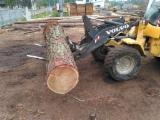 Softwood  Logs Larch Larix Spp. - Larch Saw Logs.