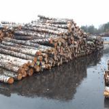 Wälder und Rundholz - Schnittholzstämme, Birke
