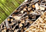 Energie- Und Feuerholz Sägemehl - Kiefer - Föhre Sägemehl