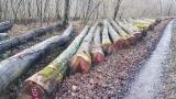 Trupci Tvrdog Drva Za Prodaju - Registrirajte Se I Obratite Tvrtki - Za Rezanje, Crveni Hrast