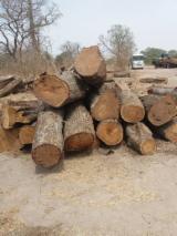 Forêts Et Grumes Afrique - Vend Grumes De Sciage Vène