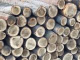 Lasy I Kłody - Kłody Tartaczne, Topola