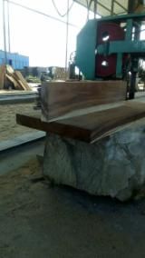 Find best timber supplies on Fordaq - MADERAS y MADERAS SA - Saw Logs, Saman