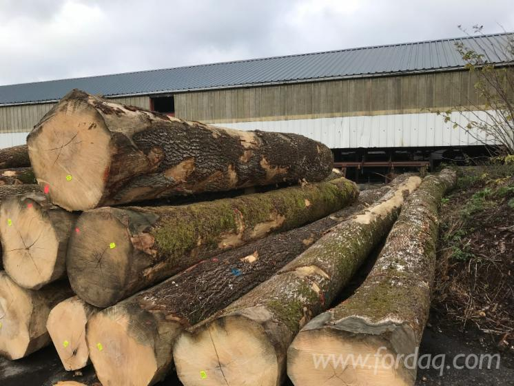 30---cm-White-Ash-Saw-Logs-from