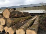 Trupci Tvrdog Drva Za Prodaju - Registrirajte Se I Obratite Tvrtki - Za Rezanje, Bijeli Jasen