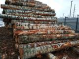 Forest And Logs Asia - Purchasing Russian Birch veneer logs