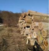 Forest and Logs - -- mm Poplar, I214 clone Saw Logs Romania