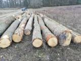 Forest And Logs Europe - 30-90 cm Oak Saw Logs from Germany, Mecklenburg-Vorpommern