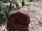 Kaufen Sie Holz auf Fordaq - Jetzt Angebote finden - Furnierholz, Messerfurnierstämme