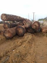Find best timber supplies on Fordaq - Ets Ewen International  - African hardwood tali,mahogany logs