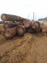 African hardwood tali,mahogany logs