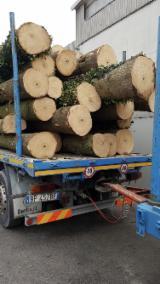 Wälder und Rundholz - Schälfurnierstämme, Paulownia