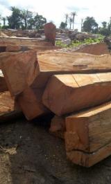 Finden Sie Holzlieferanten auf Fordaq - Ets Ewen International  - 4-seitig Sägegestreiftes Rundholz, Rhodesian Copalwood, African Rosewood, Kossoholz, Teak