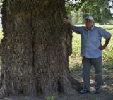 null - Black Poplar Timber and Veneer Logs, A grade